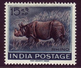 india-rhino